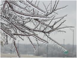 Freezing_rain_on_trees