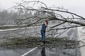 Tree_damage_from_freezing_rain