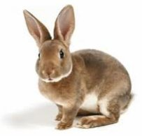 Pensive_rabbit