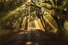 Sunshine_through_the_trees