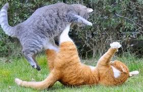 Cat_fight