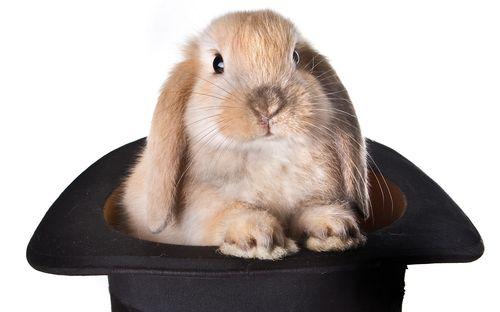 Rabbit-in-hat-27972