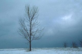 Winter-1174