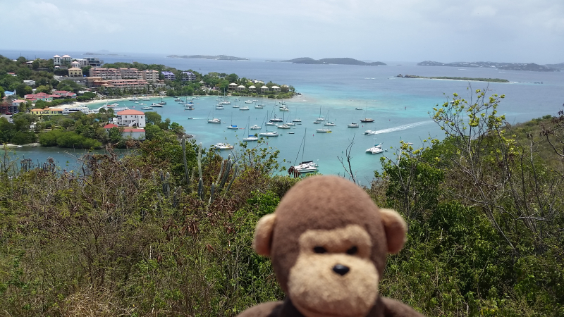 Chimpy on St. John Island