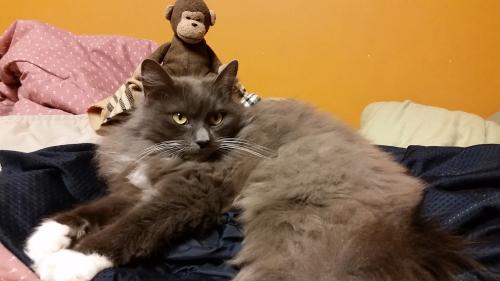 Chimpy&Sophie