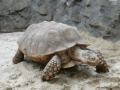 Turtle-feature-crawling-at-beach-7161