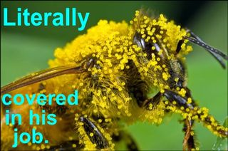 Bee_with_pollen_with_text