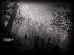 Rain_in_the_dark