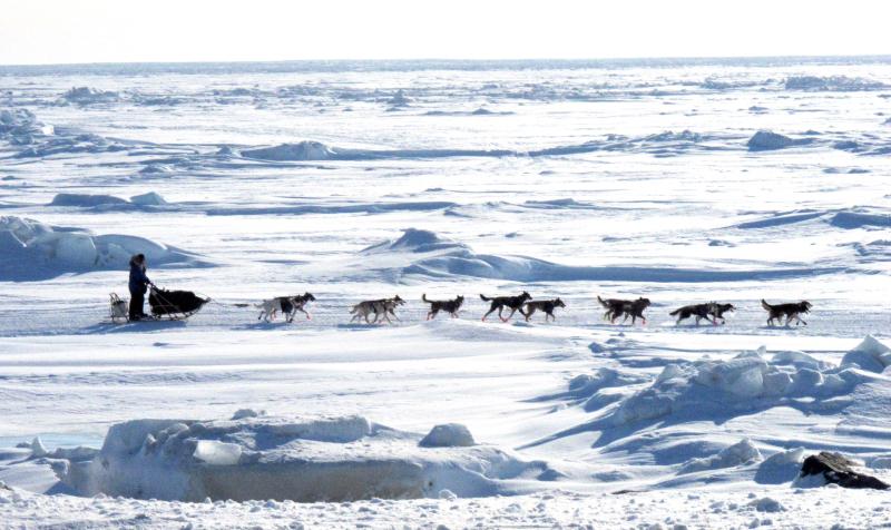 Iditarod_ONe